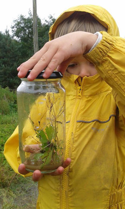 Child collects and studies insects at West Lothian kindergarten