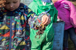 Child pulling weeds in nursery allotment