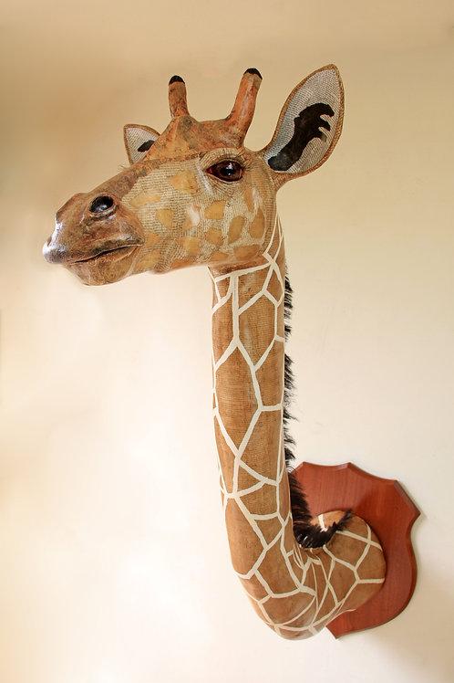 David Farrer - Giraffe
