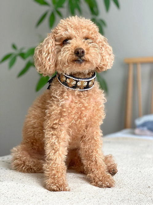 Freddy Goes to Hollywood - Estate Orchard Bee Dog Collar