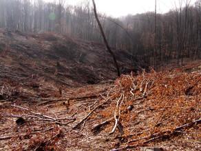 Busca la ONU detener la devastación de la naturaleza