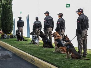 Unidades caninas han detectado 23 toneladas de droga en frontera con EUA