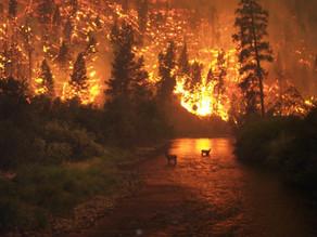 A 50 años, desafío ambiental se convirtió en lucha por sobrevivir