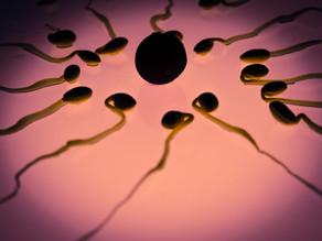 Células reproductoras artificiales podrían ser una realidad muy pronto