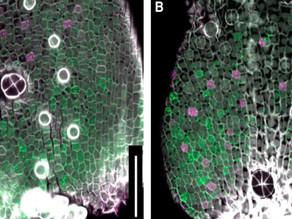 Un patrón en las hojas define los 'pulmones' de las plantas