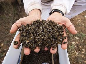 El glifosato envenena a todos, no sólo a las abejas