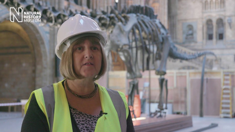Taking Dippy down: the first steps