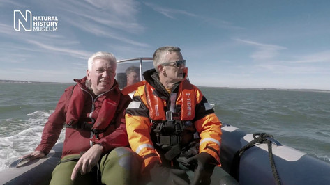 On the trail of the Wexford blue whale