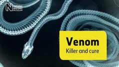 In pursuit of a universal antivenom