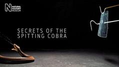 Secrets of the spitting cobra