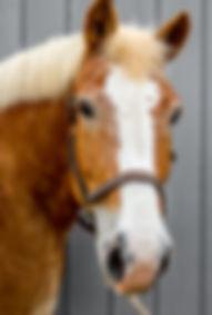 Headshots - Grey Background-49.jpg