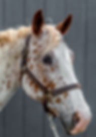 Headshots - Grey Background-13.jpg