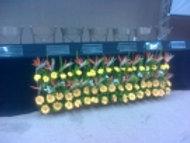 Jardineira C/ Flores Nobres