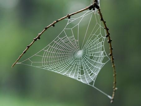 Spider - The Creative Power