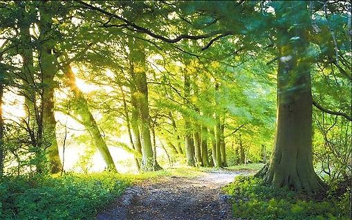 british-woodland_2422419b_edited_edited.jpg