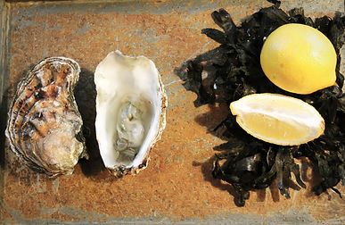 A well taken photograph of oysters and lemons