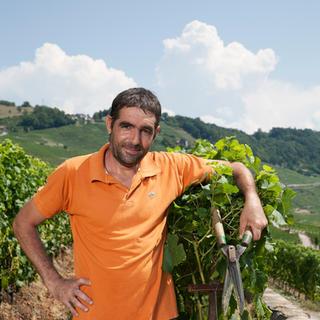 Fernando Soares Carvalho, ouvrier vitivinicole