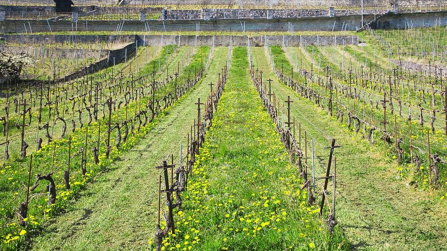 Biodiversite vignes lavaux.jpg
