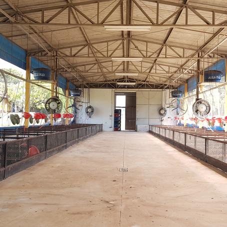 Sistema que controla clima de aviário pode evitar perdas na produção de frangos
