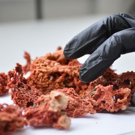 Esponjas e fungos ajudam cientistas a descobrirem medicamentos