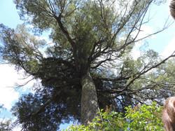 Los Cerezos - Bariloche