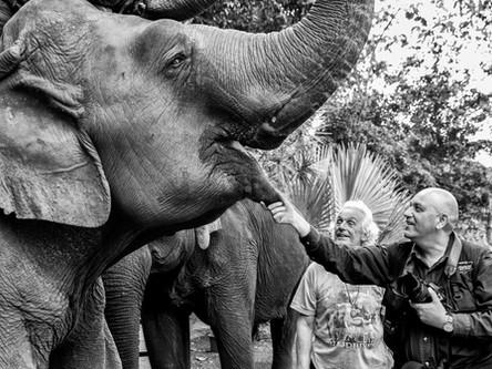 Des éléphants et des hommes