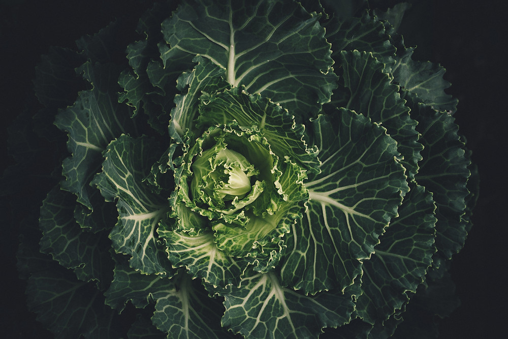 cabbage head with flowering leaves