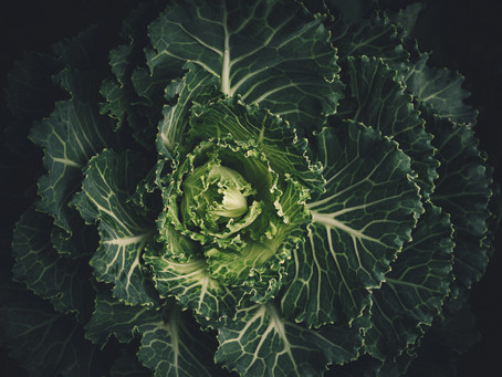 The Beauty of Brassicas
