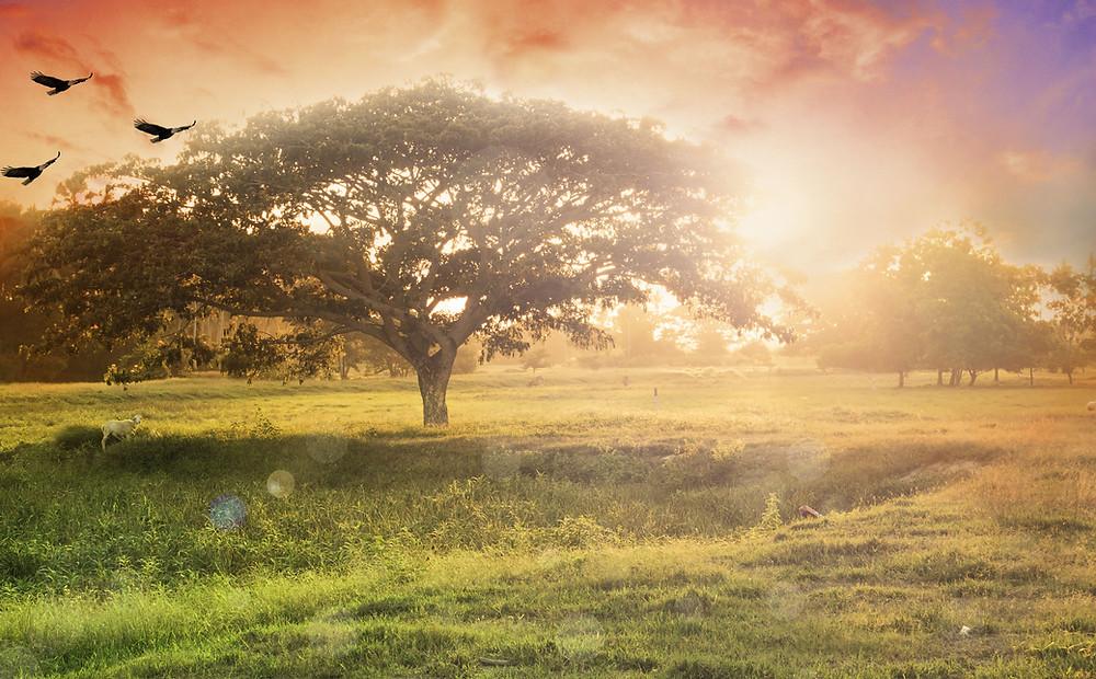 tree sunset birds