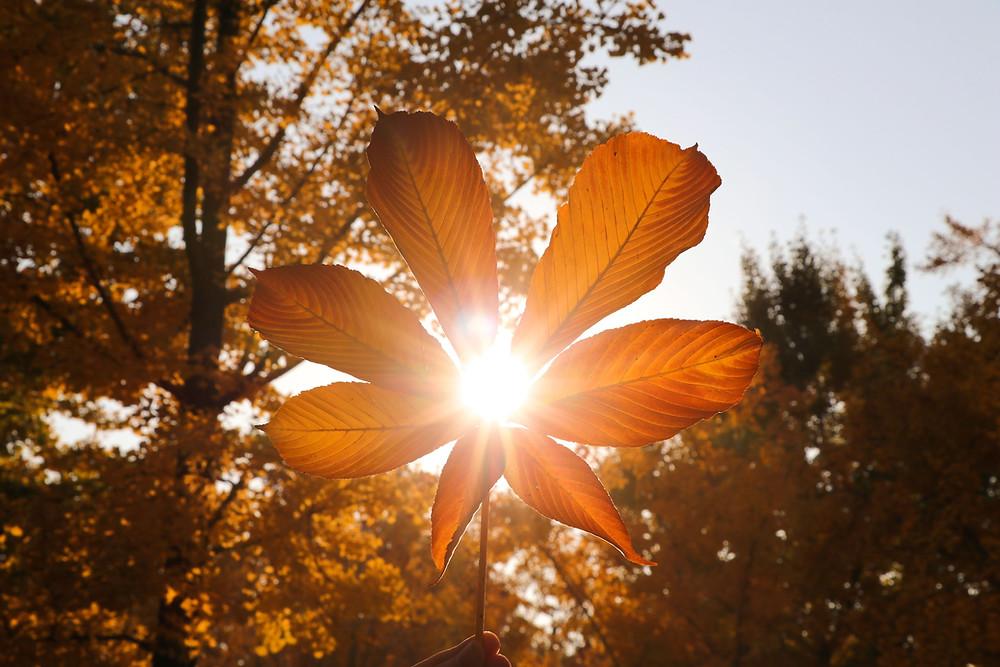 sun behind flower
