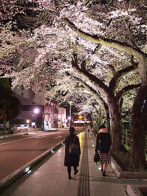 春ドキドキ桜