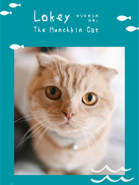 Lokey The Munchkin Cat