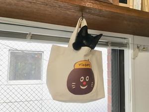 黒猫がやってきた!