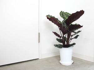 植物日記 | 7月27日〜