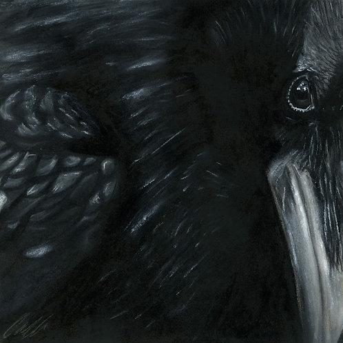 """Rex Corvus"" art print"