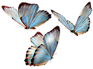 beautiful_butterfly_by_vanessyca71-d3d2c