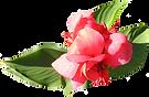 ソフトピンクの花