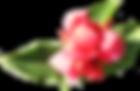 Flor-de-rosa suave
