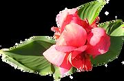 Weiche rosa Blume