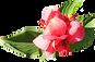 La flor rosada suave
