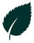 dark-green-leaf.png