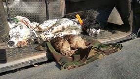 Journée de chasse aux bécasses de qualité