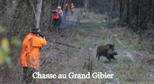 Chasse à la journée Grand Gibier Sanglier en Sologne La Briganderie