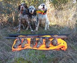 Guide chasse aux Bécasses en chiens d'arrêts