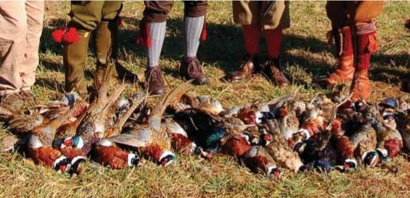 battue petit gibier groupe chasseurs en Sologne