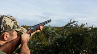 Chasse pigeons ramiers Sologne territoire à louer