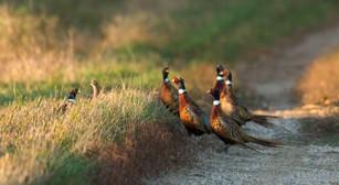 Journée de chasse découverte en Sologne La Briganderie