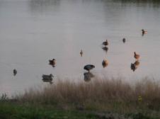 Journée de chasse canards France Sologne