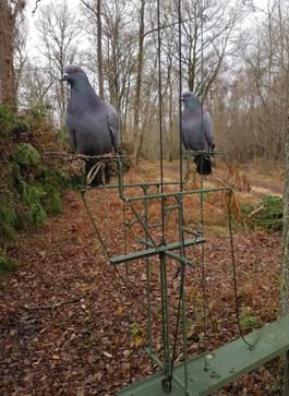 journée de chasse palombes France
