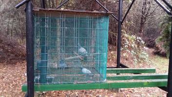 Appelants chasse pigeons ramiers Sologne